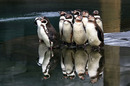 Penguins pool photo via Shutterstock