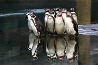 Penguins pool photo via Shutterstock
