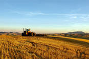Combine harvester... Photo by shutterstock