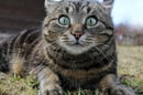 Surprised cat photo via shutterstock