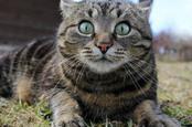 Фотография удивленной кошки через shutterstock