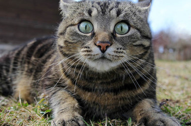 Surprised cat photo via shutterstock