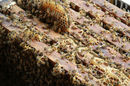 Bees hatch out of honeycomb wedged bwteen wooden bench slats. Photo by Shutterstock