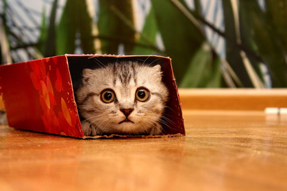 Cat in a small box photo via Shutterstock
