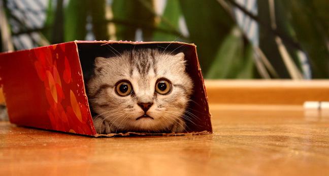 Cat in a small box photo via Shutterstock
