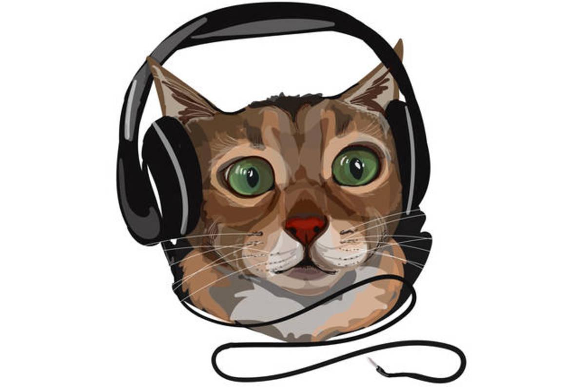 Led Cat Eat Headphones