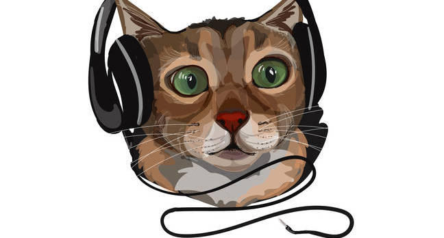 Cat in headphones. Photo by By Oksana Ashurova/shutterstock
