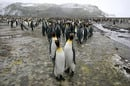 Penguins photo via Shutterstock