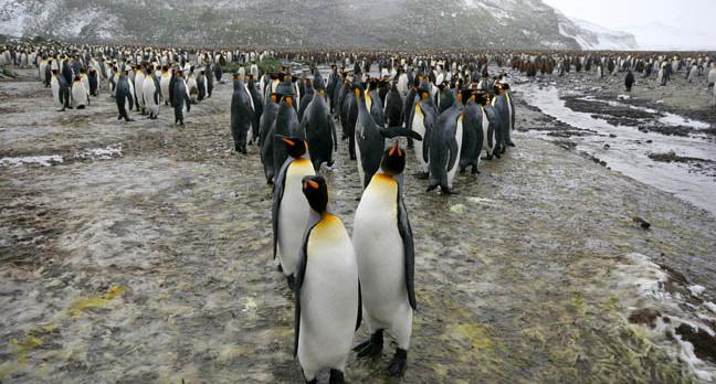 Penguins photo via Shutterstock