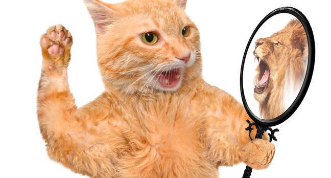 shutterstock_cat_lion