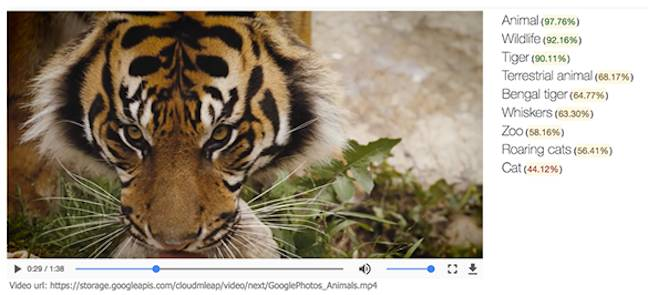 Google's Tiger video
