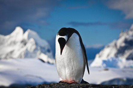 Sad penguin photo via Shutterstock