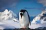 Sad penguin photo via Shutterstock