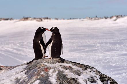 Gentoo penguins photo via Shutterstock