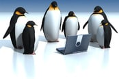 Penguins surround laptop. Pic by Shutterstock