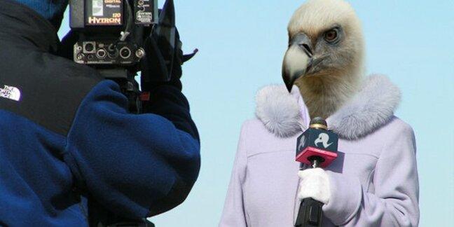 vulture tv reporter