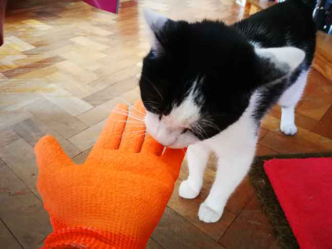 Dabbsy's cat-feeding adventure with Glovax gloves