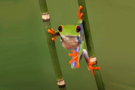 frog peers around plant... pic by shutterstock