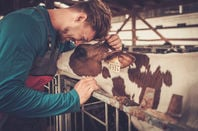 a young farmer and a calf...
