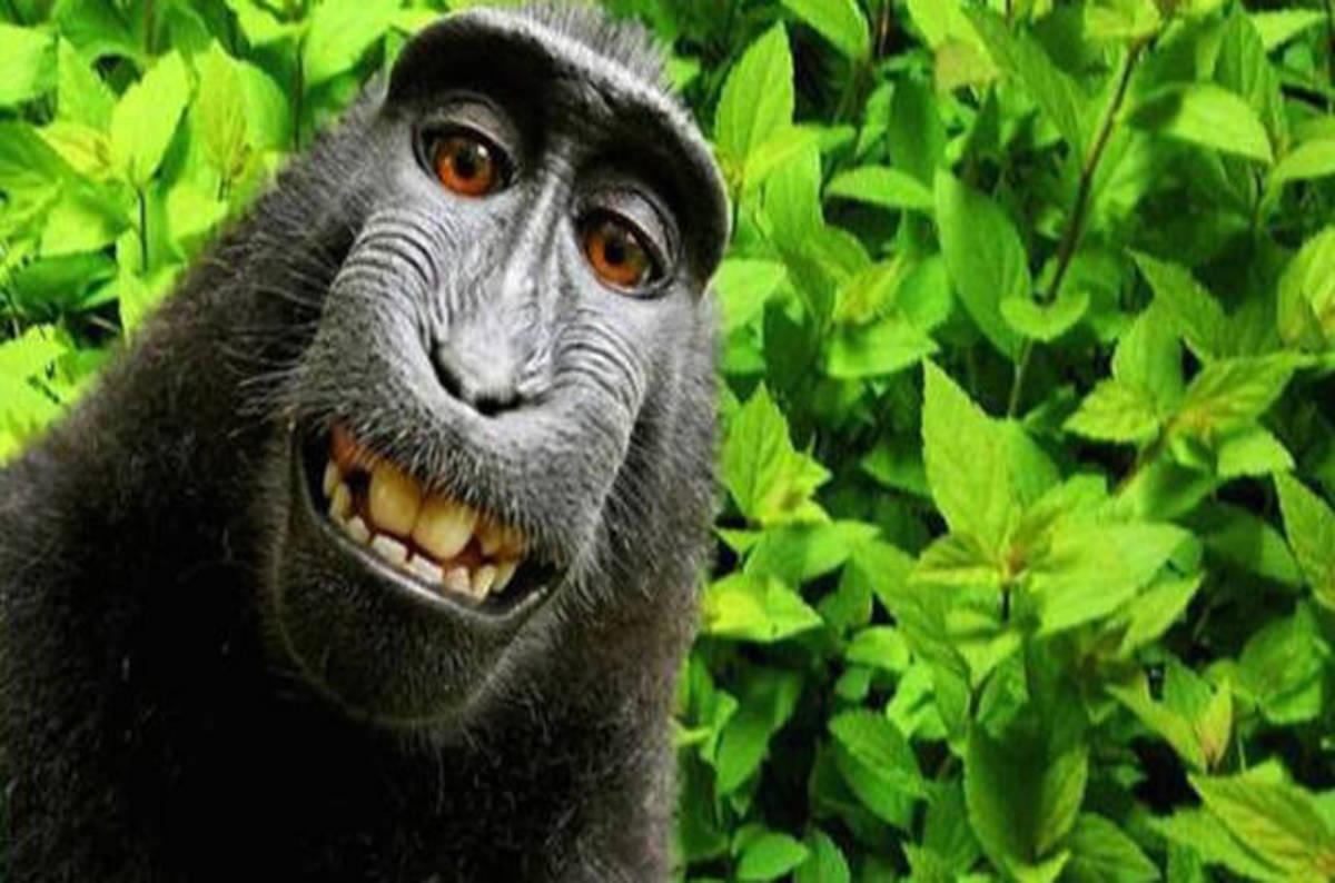 Image result for naruto selfie