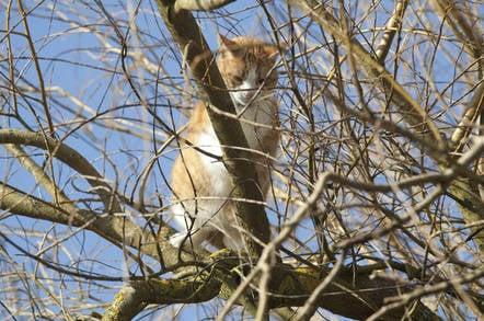 A cat stuck in a tree