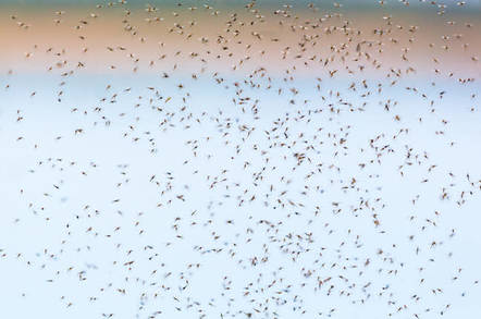 Mosquito swarm - Shutterstock - by TT Photo