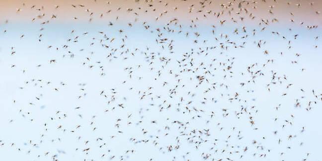 Mosquito swarm - Shutterstock - by TT Photo
