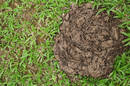 A heap of dung