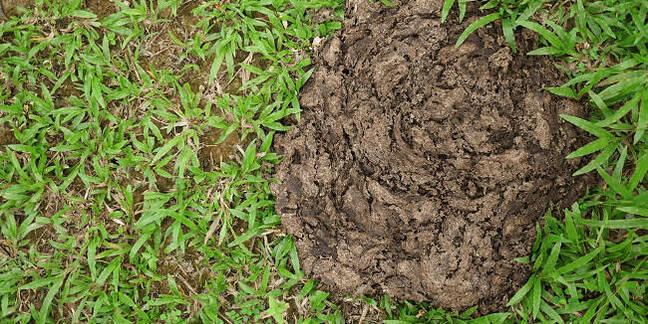 A heap of dung