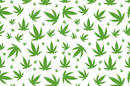 Cannabis leaves