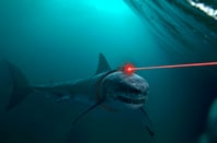 Sharks with frikkin lasers.