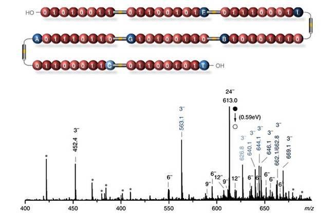 Polymer_Storage_spectra