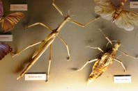 Shutterstock: insects in museum display
