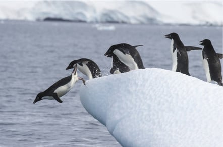 Penguins line up to dive into the icy water from the ice floe.