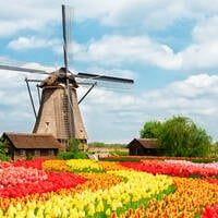 Dutch windmill with tulips