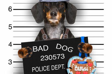 (An allegedly) Bad dog's police mug shot...