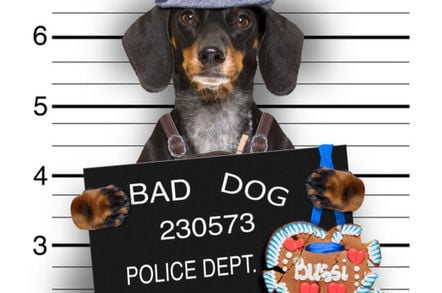 (An allegedly) Bad dog's police mug shot...