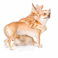 Dog and cat hug