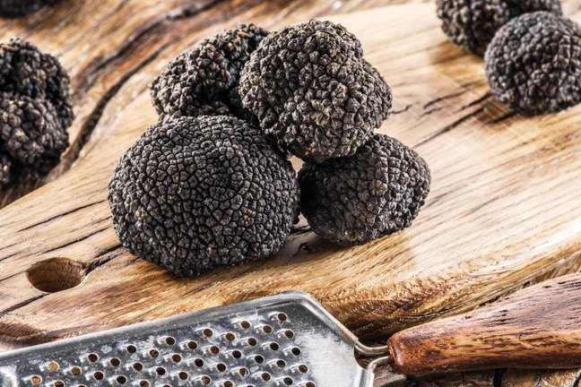 Perigord black truffle grown in Monmouthshire