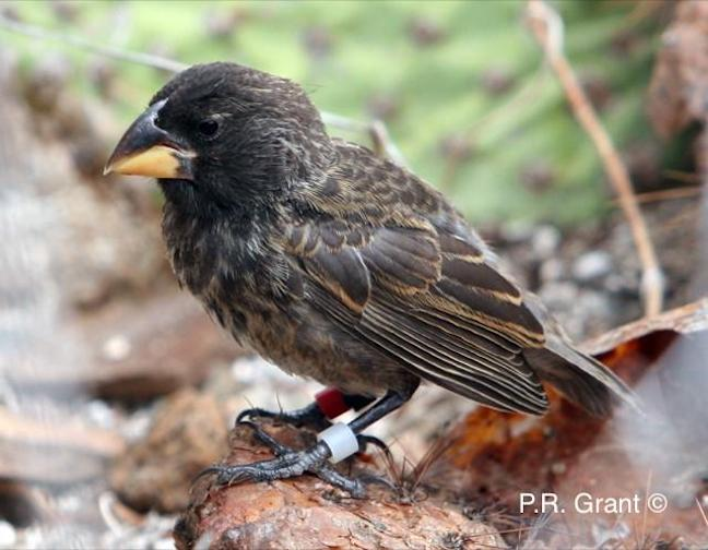 New bird species evolved in just two generations