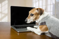 dog plays with laptop