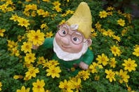 Gnome in a field of daisies