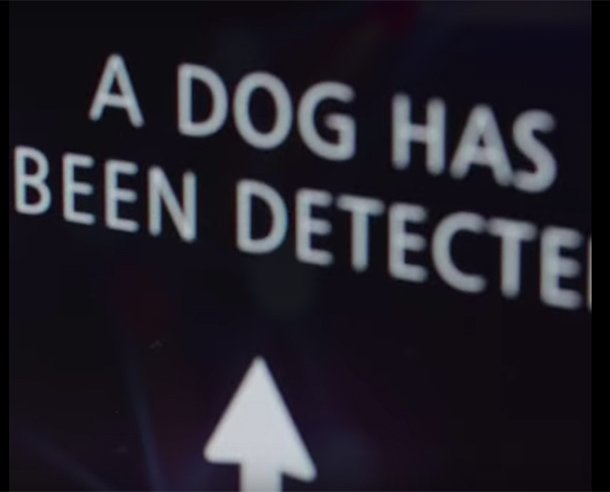 dog detected!