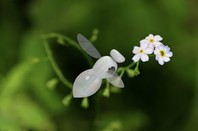 microrobot bee concept