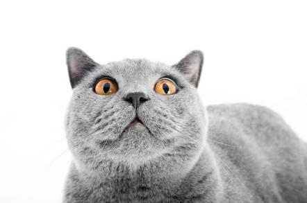 A surprised cat