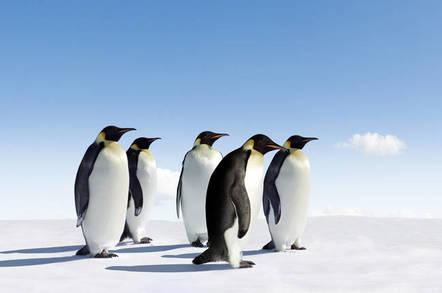 Five emperor penguins