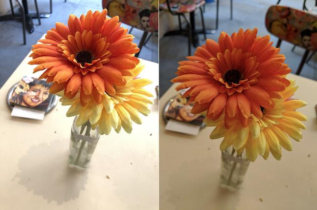iPhone 8Plus v Pixel 2 comparison - sunflower