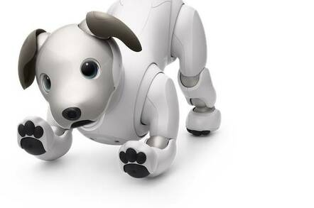 Aibo robot dog v 2.0