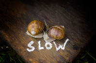 Couple of slow-coach snails