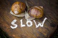 Couple of slow-coach snails